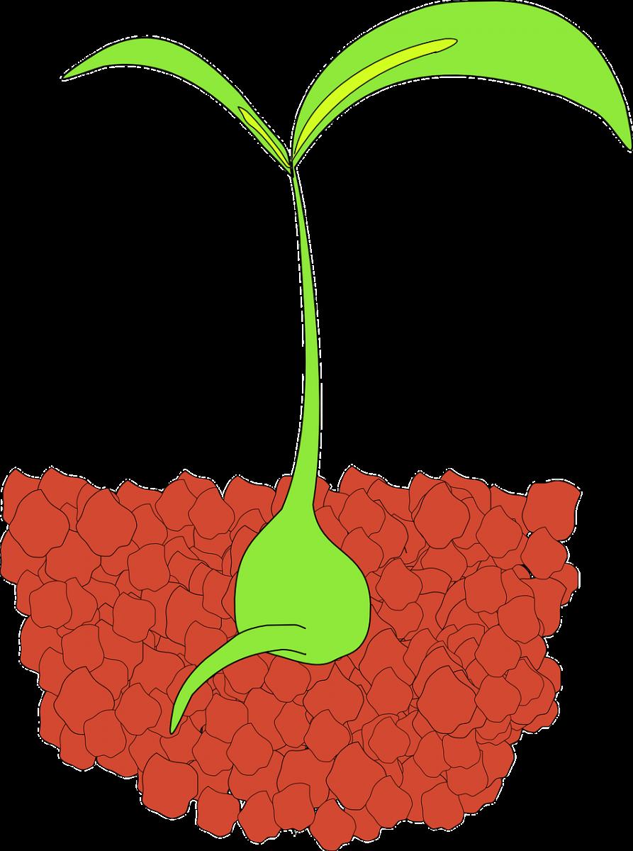 Crescere